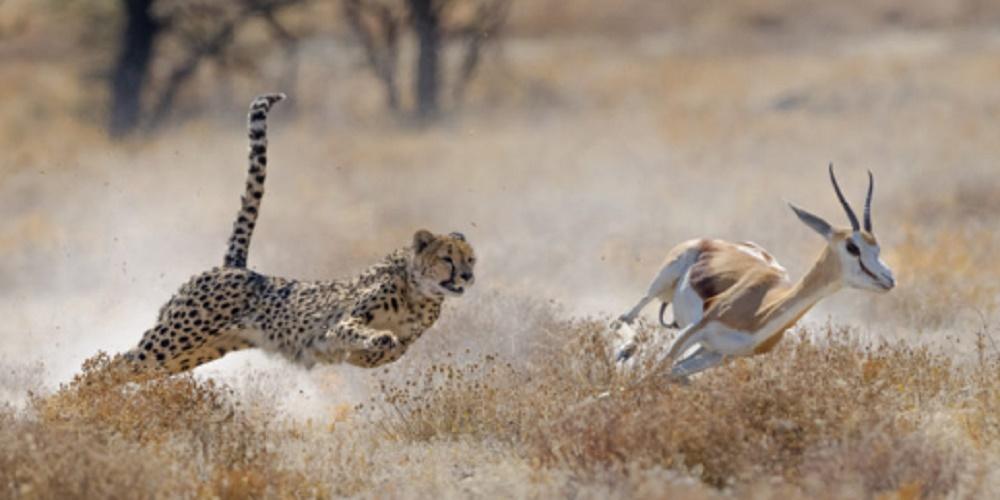 Predation - commensalism