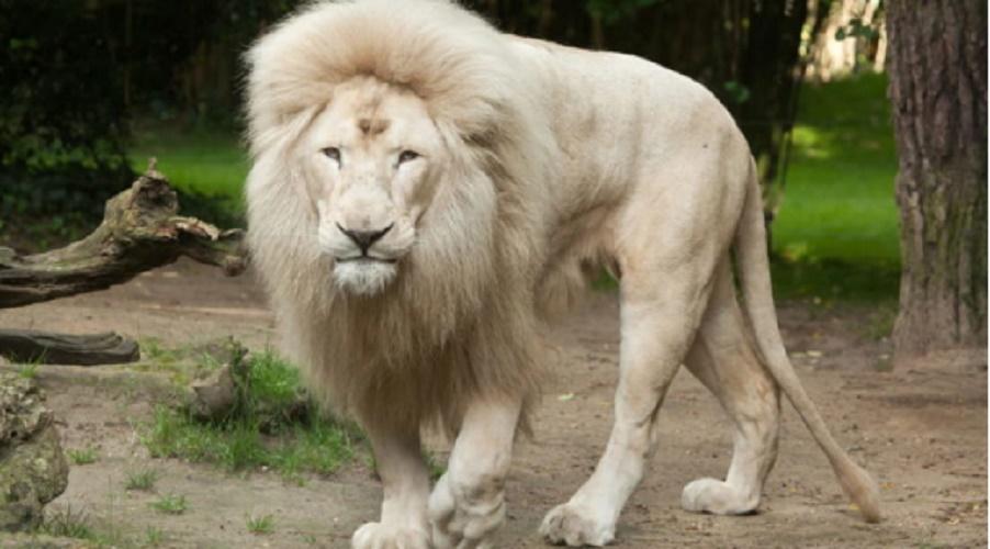 gene gene adn mutation leon white