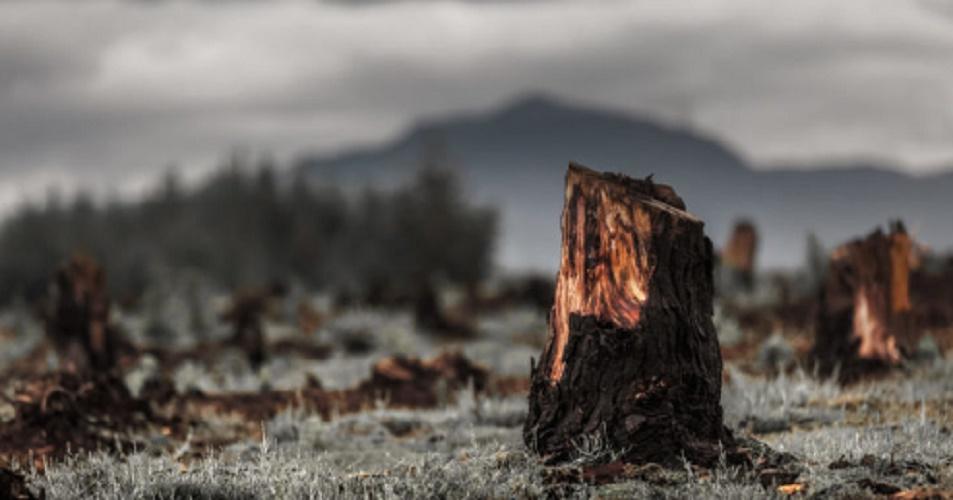 Deforestation - soil erosion