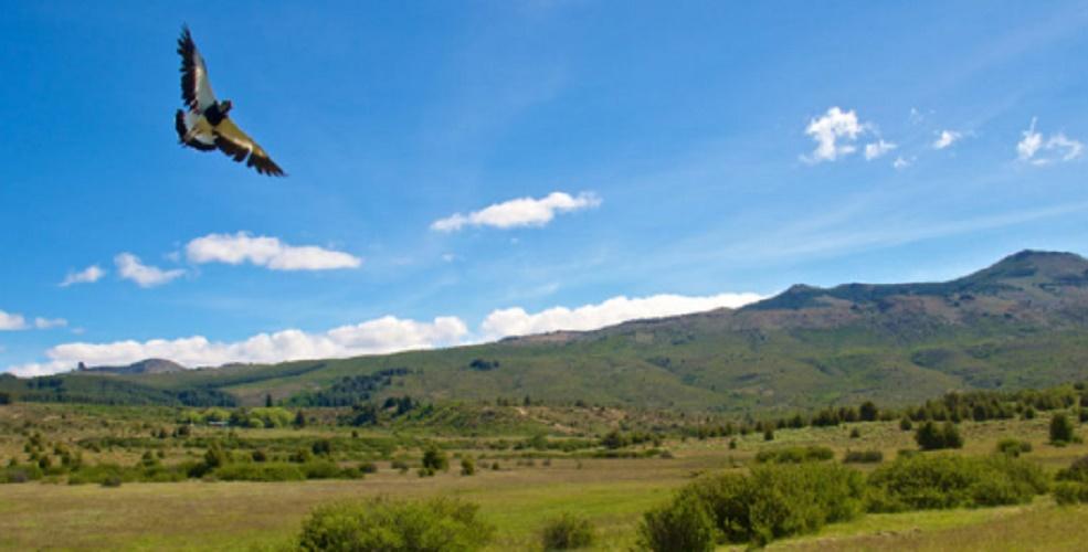 Argentine steppe