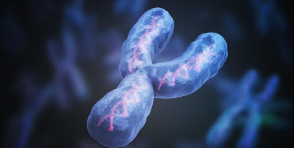 genetic inheritance - chromosome and