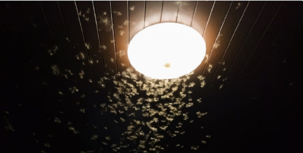 Irritability - insects - light
