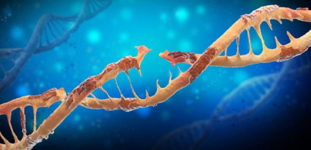 Mutation - DNA