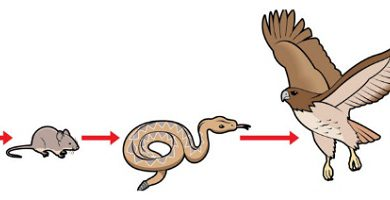 Trophic chains