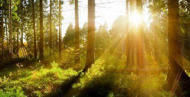 Environmental conservation
