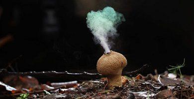 fungi fungus reproduction