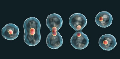 division cell reproduction