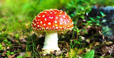 Fungi Kingdom - fungus