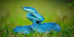 what are reptiles - Blue Snake