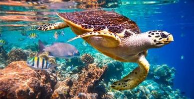 characteristics of aquatic animals