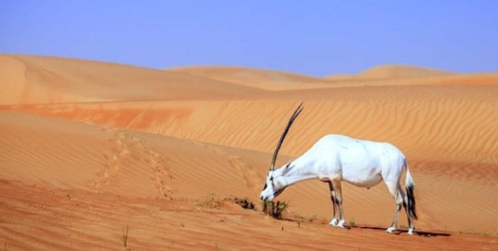 desert trophic network