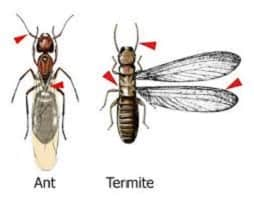 termites signs in house