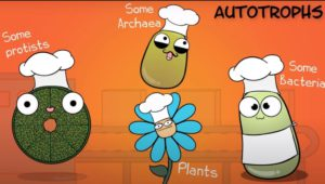 Examples of autotrophic organisms
