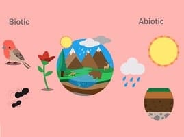 Examples of Biotic and Abiotic Factors