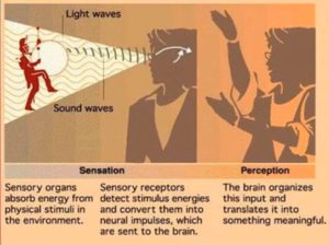 What Is The Differences Between Sensation And Perception?