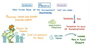 what is the difference between biotic factors and abiotic factors