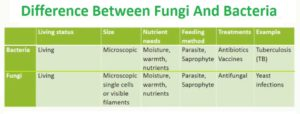 difference between Fungi and Bacteria