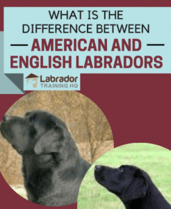 difference between English and American laboratories