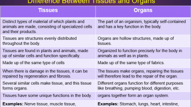 Difference between tissues and organs